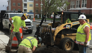 Tree Curb Plantings